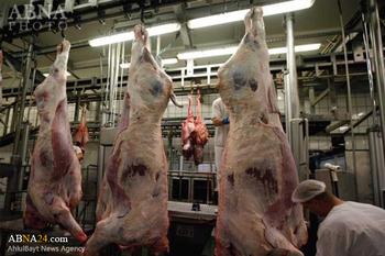 Belgium bans Islamic halal way of slaughter - International Shia